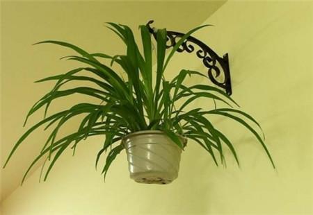 使用绿色植物去除墙纸的气味