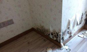 墙纸脱落的修复方法缩略图